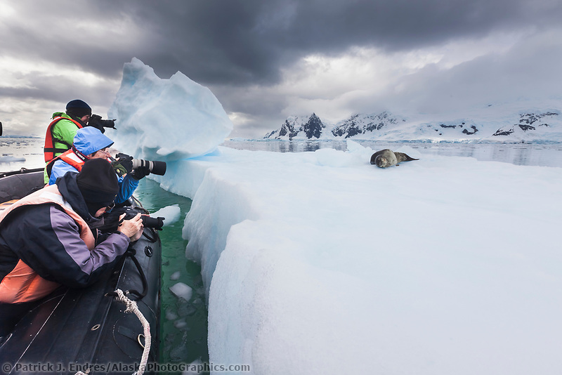 Leapord seal on iceberg in Neko Harbor, Andvord Bay, Antarctic Peninsula