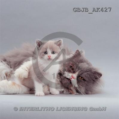 Kim, ANIMALS, fondless, photos(GBJBAK427,#A#) Tiere ohne Fond, animales sind fondo
