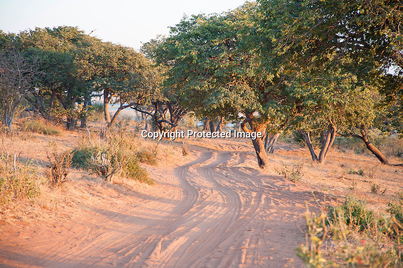 Terrain of Chobe National Park in Botswana in Africa