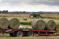 21.7.2020 Bales of silage being collected from wetland in the Lincolnshire Fens. Once arable land this area has been returned to wetland in a project to return the land to more traditional fenland landscape with shallow meres<br />  ©Tim Scrivener Photographer 07850 303986<br />      ....Covering Agriculture In The UK.