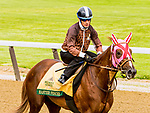 JUNE 05, 2019 : Master Fencer morning workouts for Belmont Stakes contenders at Belmont Park, on June 5, 2019 in Elmont, NY.  Sue Kawczynski_ESW_CSM