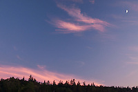 Dusk with Pink Clouds Over Witherle Woods with Crescent Moon, Castine, Maine, US