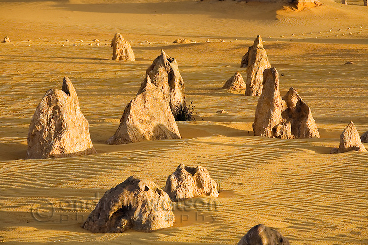 Limestone pinnacles jut out of the sand in the Pinnacles Desert.  Nambung National Park, Cervantes, Western Australia, AUSTRALIA.