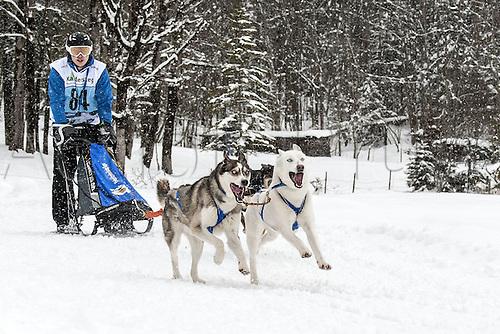 20.02.2016. Kandersteg, Bern, Switzerland. Swiss dog-sled championships.  Christian Franz (SUI)