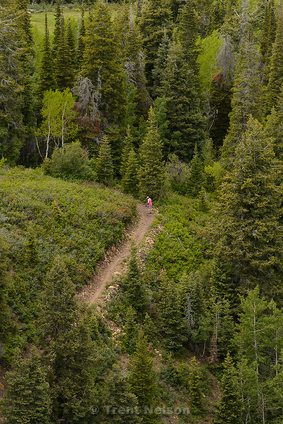 Trent Nelson  |  The Salt Lake Tribune<br /> A hiker at the Park City Mountain Resort, Saturday June 6, 2015.