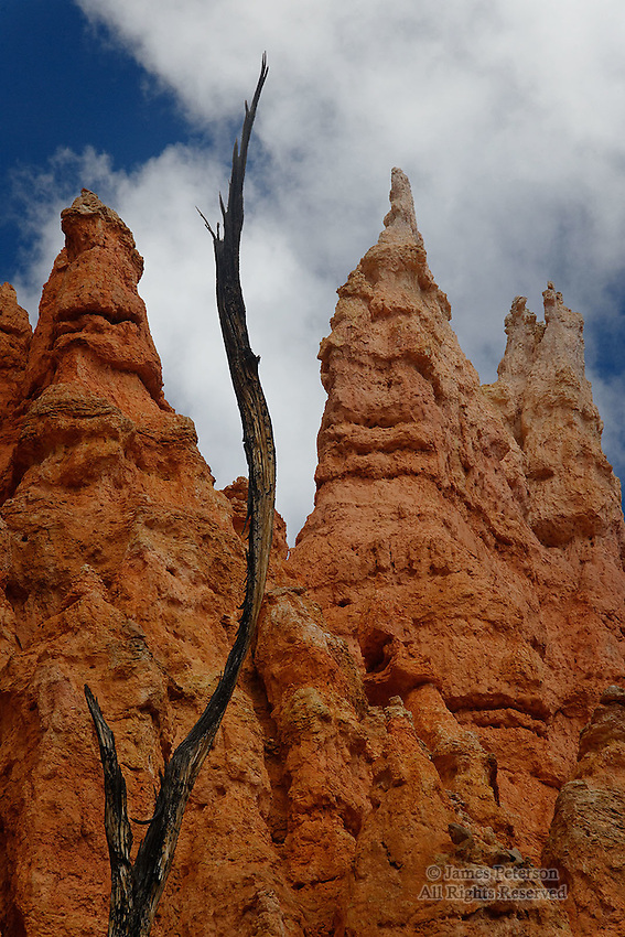 Entwined: Natural Forms, Bryce Canyon, Utah