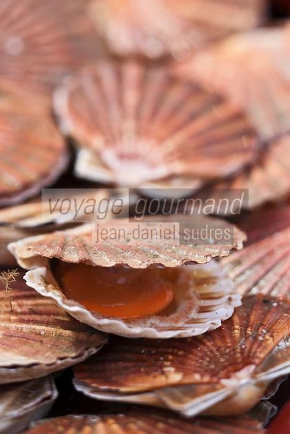 Europe/France/Nord-Pas-de-Calais/Pas-de-Calais/62/Le Touquet: Coquilles Saint-Jacques de la Côte d'Opale à l' étal de la Poissonnerie Ramet