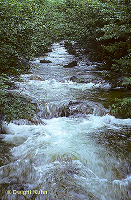 WF03-002z  Roaring Brook, Baxter State Park, Maine