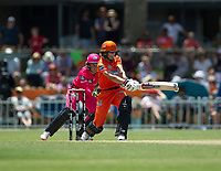 24th November 2019; Lilac Hill Park, Perth, Western Australia, Australia; Womens Big Bash League Cricket, Perth Scorchers versus Sydney Sixers; Meg Lanning of the Perth Scorchers plays a pull shot during her innings - Editorial Use