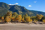 Autumn colors at The Great Sand Dunes National Park and Preserve, Colorado; USA