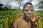 Jimmy Milaze carries drying tobacco in Chigumba, a village in northern Malawi which has been hit hard by drought and hunger. Tobacco has traditionally been grown, in addition to corn, as a way for families to earn cash. Yet falling tobacco prices have made it a less lucrative crop.