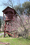 Wild Flowers in Mariposa Ca. Bear Valley, Bagby,<br /> Merced River