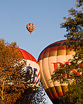 Hot air balloons lift over the trees in early morning at the annual Winchester Balloon Festival.  Long Branch Farm, Winchester, Virginia, USA.  © RickCollier.com.