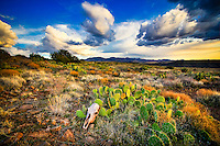 Aqua Fria Skull & Prickly Pear - Arizona - Agua Fria National Monument.