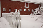 This red barn is located in the center of the historic New England town of Newfane Vermont . Newfane is in the southern part of the state. A white picket fence and snow covered branches frame the scene as the snow falls on a cold day in Februrary.