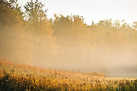 Foggy morning in autumn on a Michigan farm.