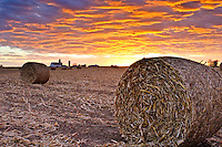 Dramatic sunset over corn field with round bales of silage.