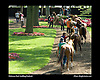 Delaware Park Saddling Paddock