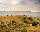 USA, Montana, person riding horse in open landscape, Gallatin National Forest, Emigrant