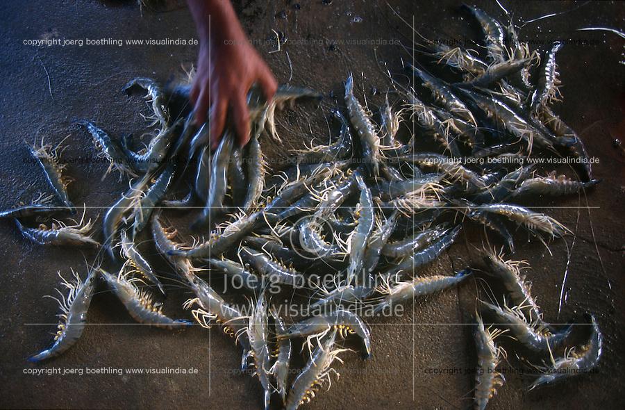 INDIA Tamil Nadu Nagapattinam, shrimp farm for export, negative effects: breeding with antibiotics and fertilizer, salinization and loss of agricultural land for food crops / INDIEN, Garnelenzucht fuer den Export, negative Effekte Versalzung, Verlust landwirtschaftlicher Flaechen fuer Nahrungsanbau, massiver Einsatz von Antibiotika und Wachstumshormonen