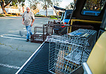 Ray Zeeb and Julie Linford pack empty traps back into Zeeb's truck after returning presiously trapped cats to their outside home areas in Antioch, California, on Saturday, March 22, 2014.  All of the cats have been spayed/neutered, vaccinated and ear tipped. Zeeb volunteers for H.A.R.P. (Homeless Animal Response Program) and Linford runs Outcast Cat Help of Martinez.  Photo/Victoria Sheridan