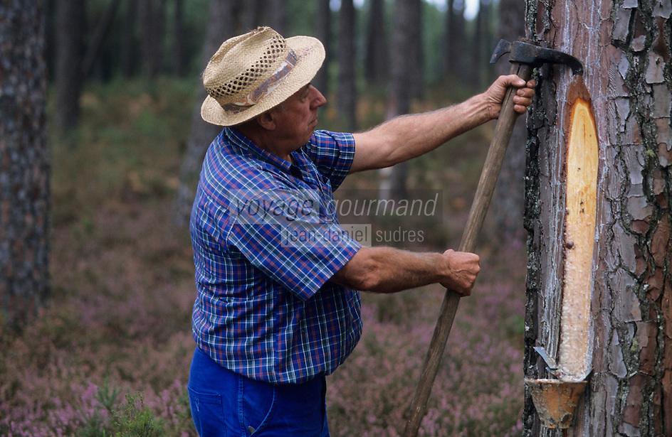 Europe/France/Aquitaine/40/Landes/Parc Naturel Régional des Landes de Gascogne/Marquèze (écomusée de la Grande Lande): Raffi Louis (gemmeur) (AUTO N°15)<br /> PHOTO D'ARCHIVES // ARCHIVAL IMAGES<br /> FRANCE 1990