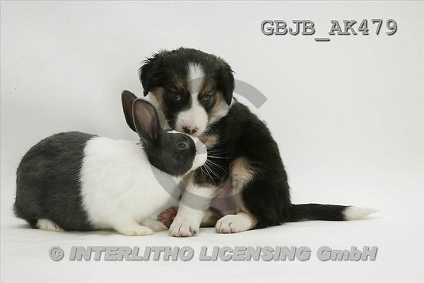 Kim, ANIMALS, fondless, photos(GBJBAK479,#A#) Tiere ohne Fond, animales sind fondo