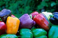 HS41-135x  Pepper - sweet bell peppers, Islander, Yankee Bell, Northstar, Corona Secret, Bianca varieties