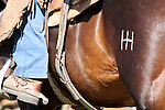 A cowboys horse with a double H brand