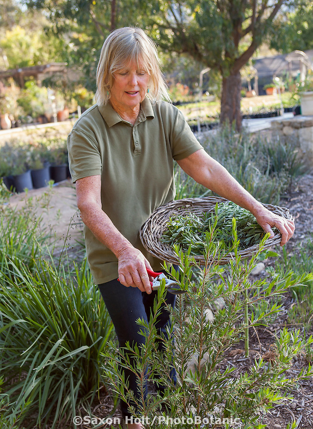 Jo O'Connell working in her Australian Native Plant Nursery, Ventura, California