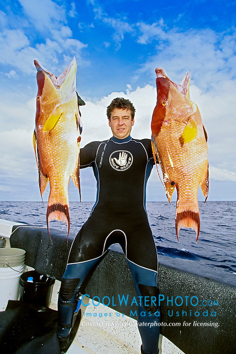 spearfisherman with good catches - hogfish, Lachnolaimus maximus, off Tampa, Florida, USA, Gulf of Mexico, Caribbean Sea,  Atlantic Ocean, Model Released - MR#: 000012