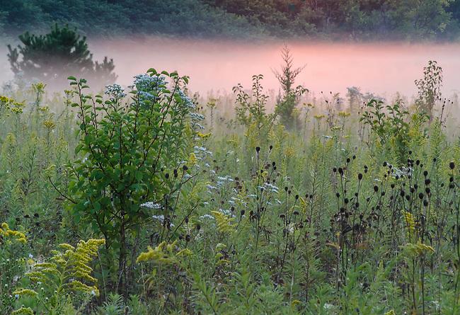 Sunrise light turns morning mist a pink hue, Springbrook Prairie Forest Preserve, DuPage County, Illinois