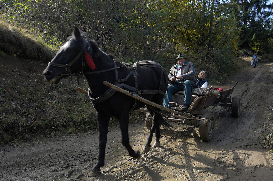 Farmer with traditional horse-drawn carriage, Transylvania, Southern Carpathians, Romania