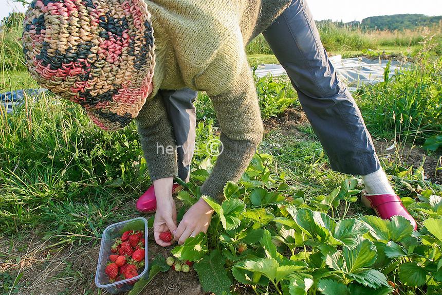 Récolte de fraises (Mara des Bois & Gariguette) // Strawberry crop (Mara des Bois & Gariguette)
