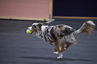 2 Fast Fur U Flyball Practice