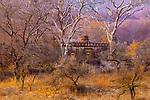 Ancient ruins, Ranthambore National Park, Rajasthan, India