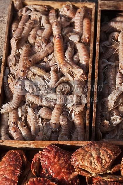 Afrique/Afrique du Nord/Maroc/Essaouira: Détail étals des marchands au marché au poisson sur le port - Cigales de mer et crabes