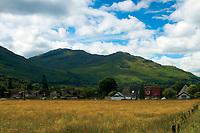 Ben Reoch from Succoth, Glen Loin in the Argyll Forest Park near Arrochar, Loch Lomond & The Trossachs National Park, Argyll & Bute