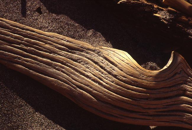 Warm light raking across an old piece of driftwood.