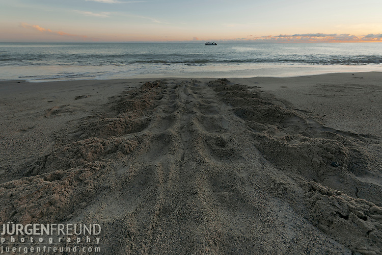 Leatherback turtle tracks on the sand.