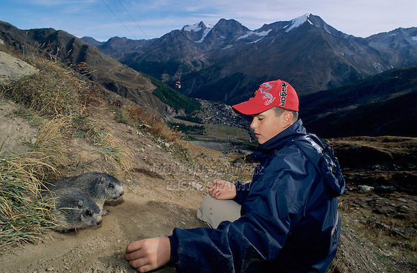 Alpine Marmot, Marmota marmota, kid feeding marmots with carrots, Saas Fee, Switzerland, September 2003
