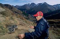 Alpine Marmot, Marmota marmota, kid feeding marmots with carrots, Saas Fee, Switzerland, September 2003
