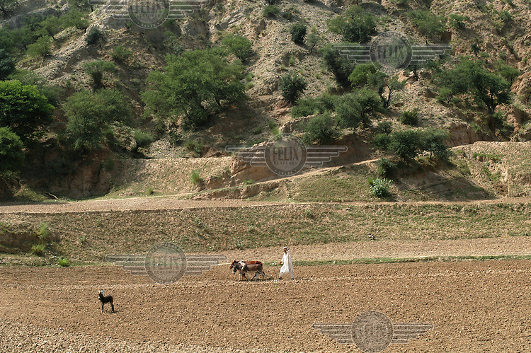 A farmer ploughs his field with a donkey and a cow in the village of Walaki Magabatt. North West Frontier Province (NWFP).