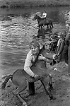 Appleby in Westmorland traditional annual gypsy Horse Fair Cumbria. 1981. Gypsy catching a pony or foul that will be washed.