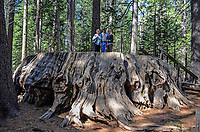 Estelle Bromilow, Neil Bromilow, Hazel Patterson, dwarfed by the base of a California Redwood, aka Sequoia at Calaveras Big Trees State Park, California, USA, 201304211658<br />