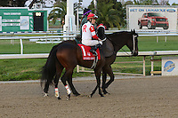 January 17, 2015:International Star (NY) with Miguel Mena in the Lecomte Stakes at the New Orleans Fairgrounds course. Steve Dalmado/ESW/CSM