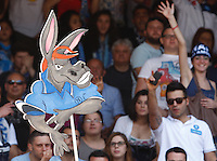 """ ciuccio ""  Napoli's mascotte hold up by supporter as celebrate after winning an Italian Serie A football match against Siena and qualify for the UEFA Champions League on May 12, 2013 at San Paolo Stadium in NaplesNAPOLI CACIO FESTA QUALIFICAZIONE  CHAMPIONS"