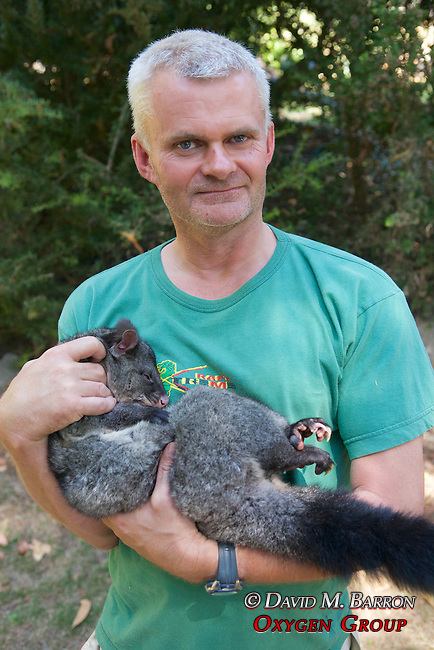 Hugh Maughan Holding Mountain Brushtrail Possum