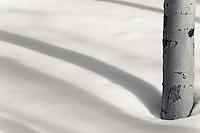 Winter Aspen shadows - Arizona
