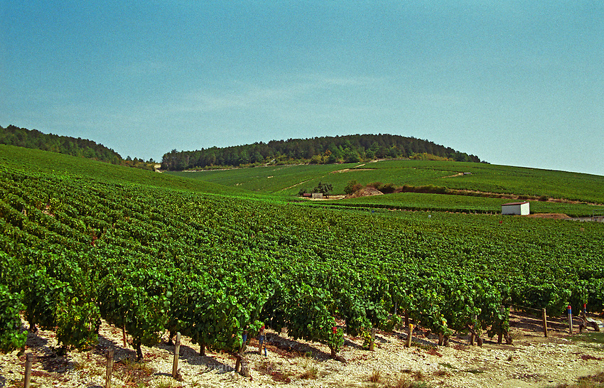 Chablis: the Grenouilles grand cru vineyard, Bourgogne